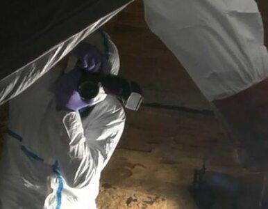 Badania DNA potwierdziły tożsamość ofiary. W piwnicy odkryto szczątki...