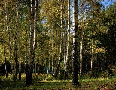 Minister Woś: Zakaz wstępu do lasu będzie zdjęty, ale...