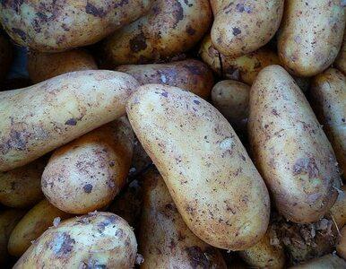 Nadciśnienie? Pomogą... ziemniaki