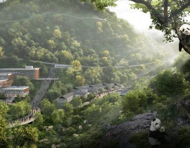 Na ratunek pandom. W Chinach powstanie nowoczesny rezerwat