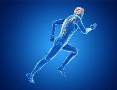Sport zmienia sposób metabolizowania żelaza w mózgu i chroni przed...