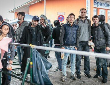 Rząd w Berlinie wiedział o nadciągającej fali imigrantów, ale zignorował...