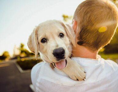 """Czy pies może być """"dowodem rzeczowym""""? Znęcanie się nad zwierzętami a..."""