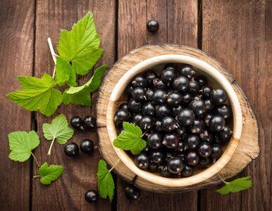 Czarna porzeczka jednym z najzdrowszych owoców. Ma więcej witaminy C niż...