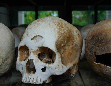 Aarcheolodzy badają kości znalezione w hałdzie ziemi we Wrocławiu