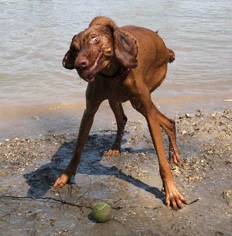 Co te piłeczki robią z psami...