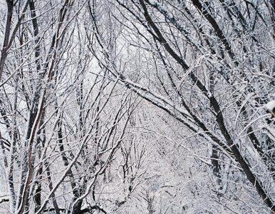 Czwartek pochmurny z opadami deszczu ze śniegiem. Miejscami poprószy śnieg