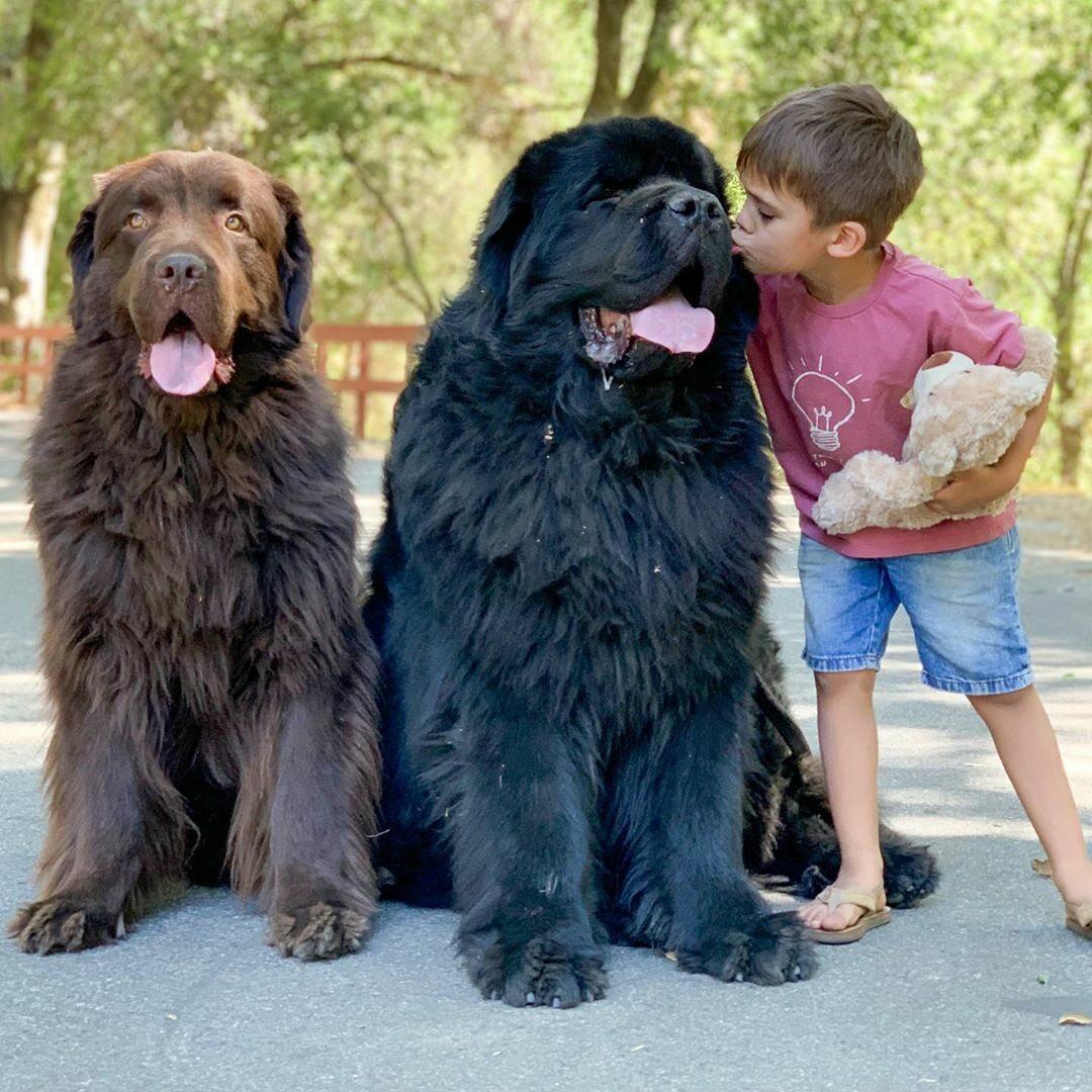 Ralphie i Boss oraz ich opiekunowie