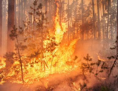 Hiszpania zmaga się z falą pożarów lasów