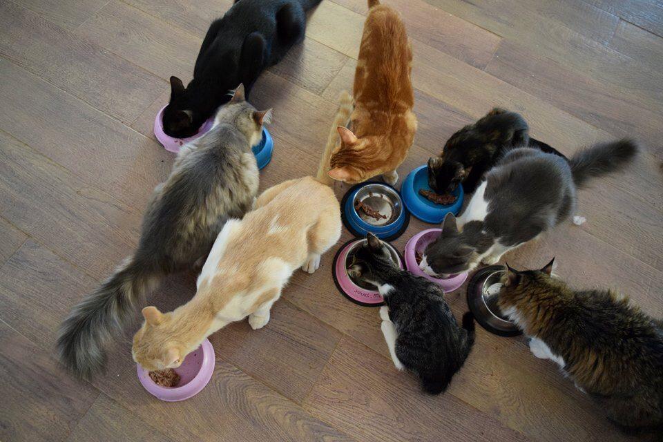 Schronisko dla kotów na wyspie Syros