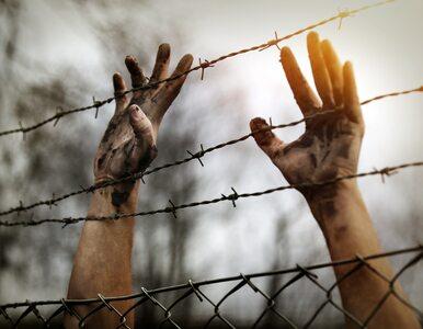 Psycholodzy chcą pomóc uchodźcom. Ważny apel naukowców z kilku ośrodków
