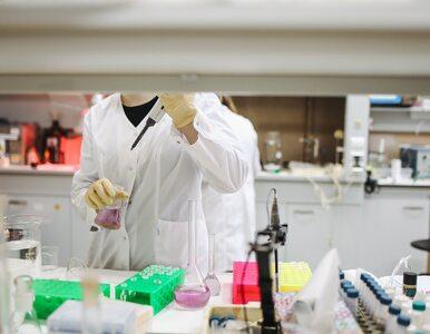 PAN: Powstanie suplement diety hamujący koronawirusa? Nowe badania