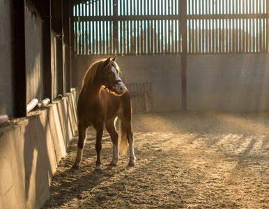 Na farmie znaleziono 32 martwe konie. Już wcześniej zgłaszano, że są...