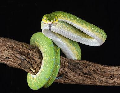 Dieta węża – czy możemy uczyć się od gadów, jak schudnąć?