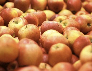 Szkoły chcą jabłek, ale nie dostaną ich, bo...