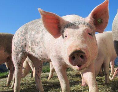 ORLEN inwestuje w kolejne biogazownie rolnicze