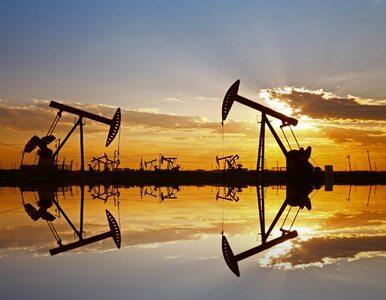Dolar traci, a ropa naftowa drożeje. Dziś ważne informacje z rynku pracy