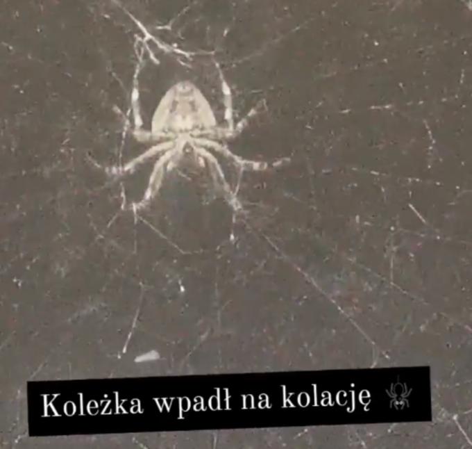 Pająk sfilmowany przez Marikę Popowicz
