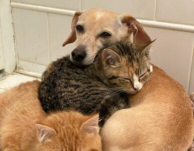 """Wzruszająca przyjaźń psa i porzuconych kociaków. """"To on uratował im życie"""""""