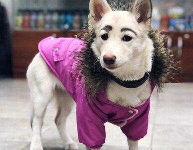 """Zaopiekowała się nietypowym psem. """"Z powodu brwi przypomina znaną artystkę"""""""