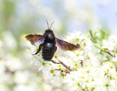 """""""Czarna pszczoła"""", modliszka. Rzadkie owady coraz częściej widywane są w..."""