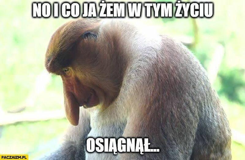 Małpka, która pojawia się na popularnych memach to: