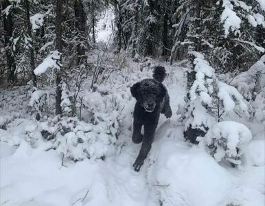 Człowiek z plecakiem biegnący do lasu? Prawda o tym zdjęciu wbije was w...