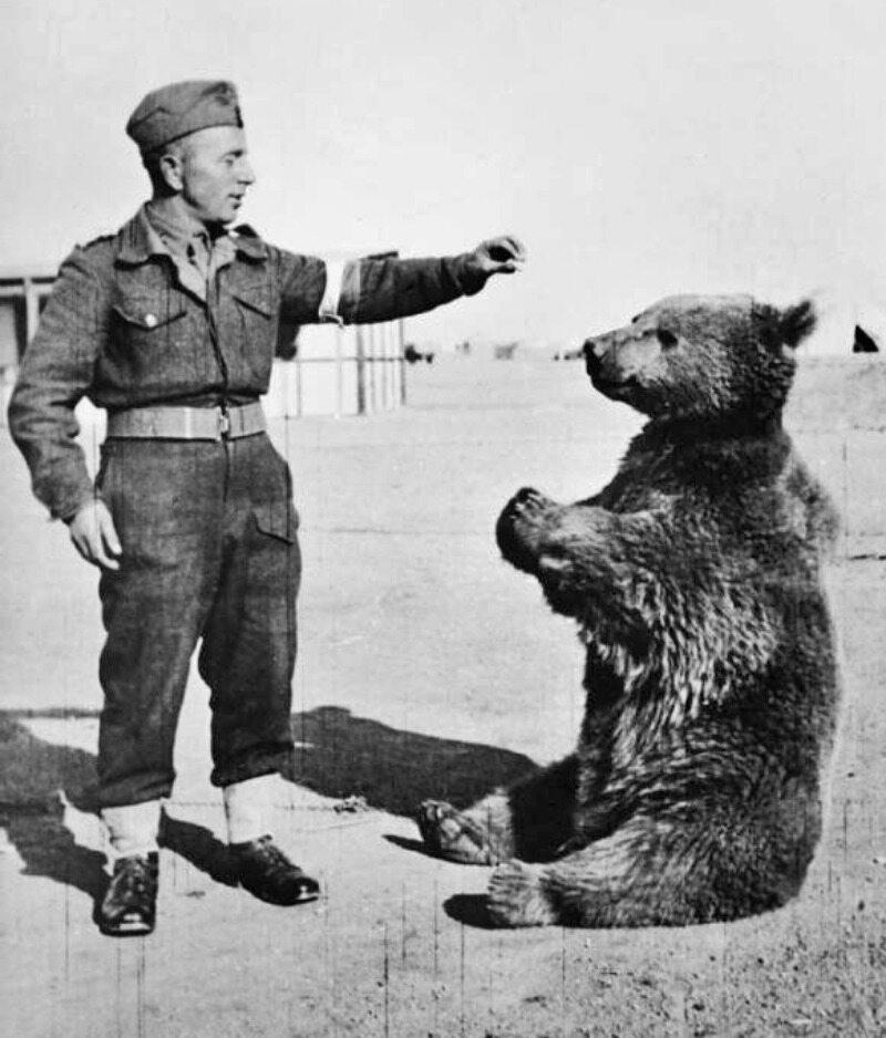 """W której bitwie miał brać udział niedźwiedź """"Wojtek"""", pomagając w noszeniu amunicji?"""