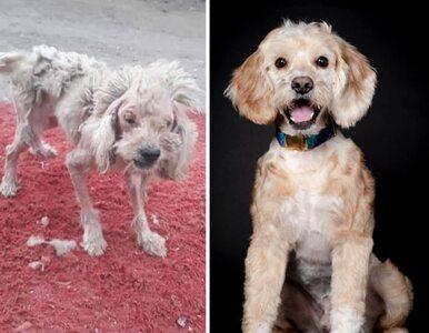 Te psy przeszły ogromną metamorfozę. W niczym nie przypominają siebie...