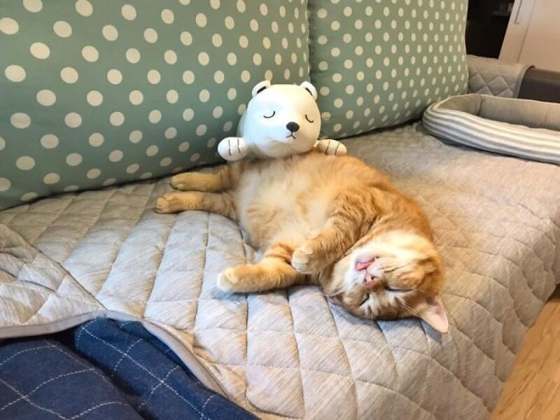 Fat Xiang, śpiący kot