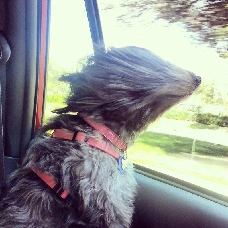 Piasek we włosach potargał wiatr...