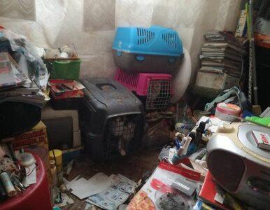 20 kotów i pies w małym mieszkaniu. Zmęczeni fetorem sąsiedzi wezwali...