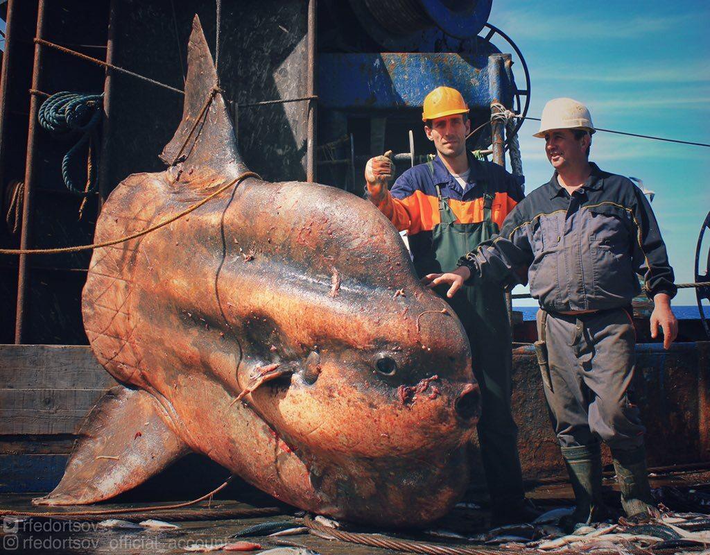 Ryba wyłowiona przez rosyjskiego rybaka, Romana Fedorstova