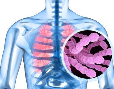 Pneumokoki: niebezpieczne bakterie oporne na antybiotyki. Istnieje na...