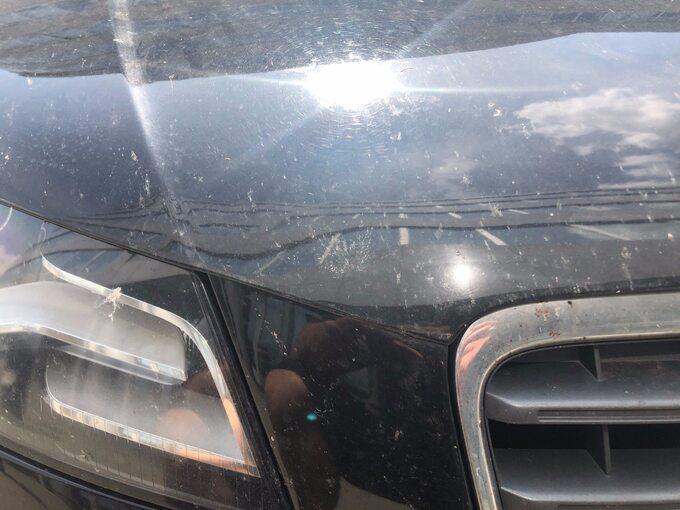 Samochód zabrudzony przez owady
