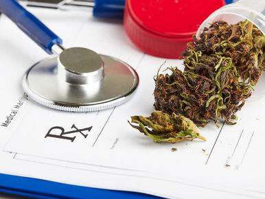 Sejm za leczniczą marihuaną. Kluby jednomyślnie poparły projekt
