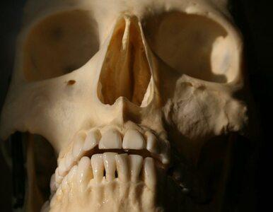 Ludzkie szczątki na placu budowy. Ppozostałości po mogile?