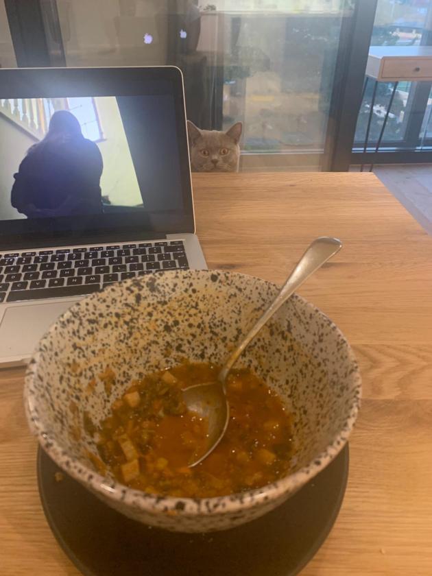 Tak wygląda praca zdalna z kotem w domu