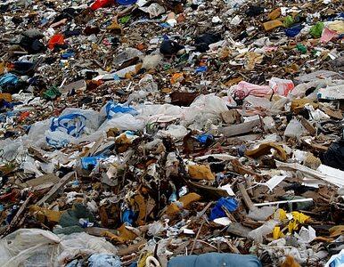 Handlowcy wyrzucili na śmieci... 500 tys. ton jedzenia