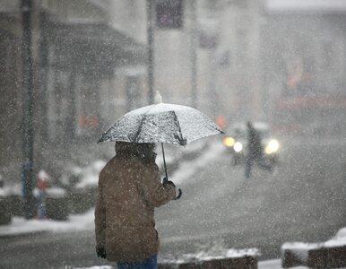 Niższe temperatury i małe ilości słońca – takie warunki mogą sprzyjać...