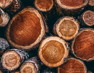 Naukowcy: spalanie drewna nie jest zieloną energią
