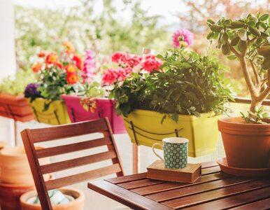 Kwiaty na balkon: 7 najpopularniejszych gatunków