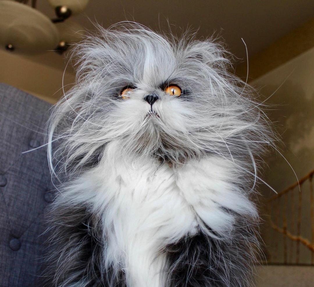 Kot o imieniu Atchoum