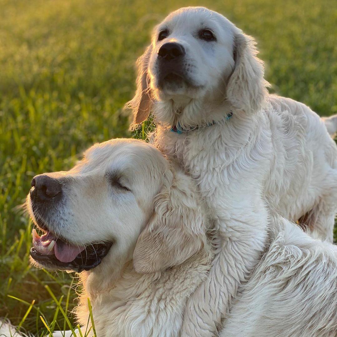 Pies Tao i szczeniak Oko