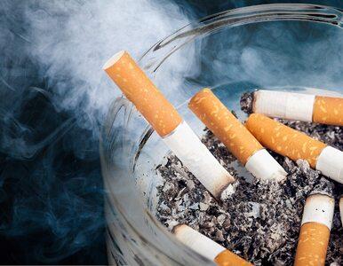 Bloomberg: Nowe badania pokazują związek między paleniem papierosów a...