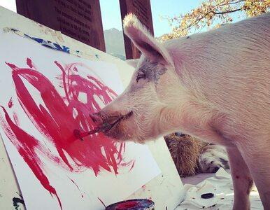 Poznajcie Pigcasso. Świnię, która maluje jak Picasso