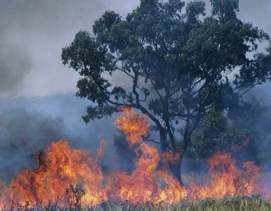Australijska policja oskarżyła 24 osoby. Chodzi o celowe wzniecanie pożarów