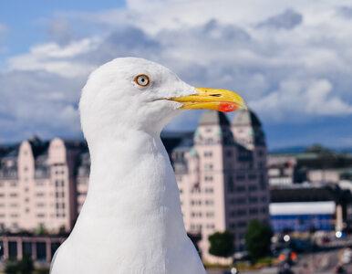 Ptaki o dziwnych barwach. Skąd się biorą w miastach?