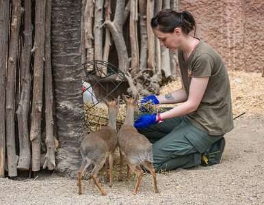 Ubój zwierząt hodowlanych we wrocławskim zoo? Prezes wydał oświadczenie