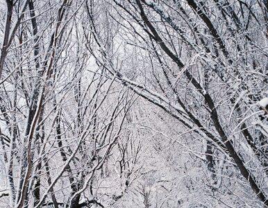 IMGW wydało ostrzeżenia dla 12 województw. Silny wiatr, śnieg i...